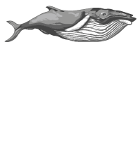 Ocean Film Festival World Tour Logo